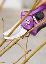 What to PRUNE and WHEN…