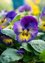 April Garden Checklist